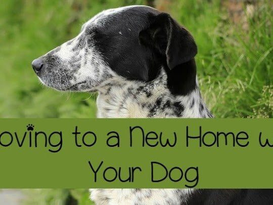Make your dog comfortable with the move